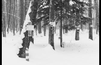 Коммунарка. Фото: Елена Балакирева. Архив общества Мемориал